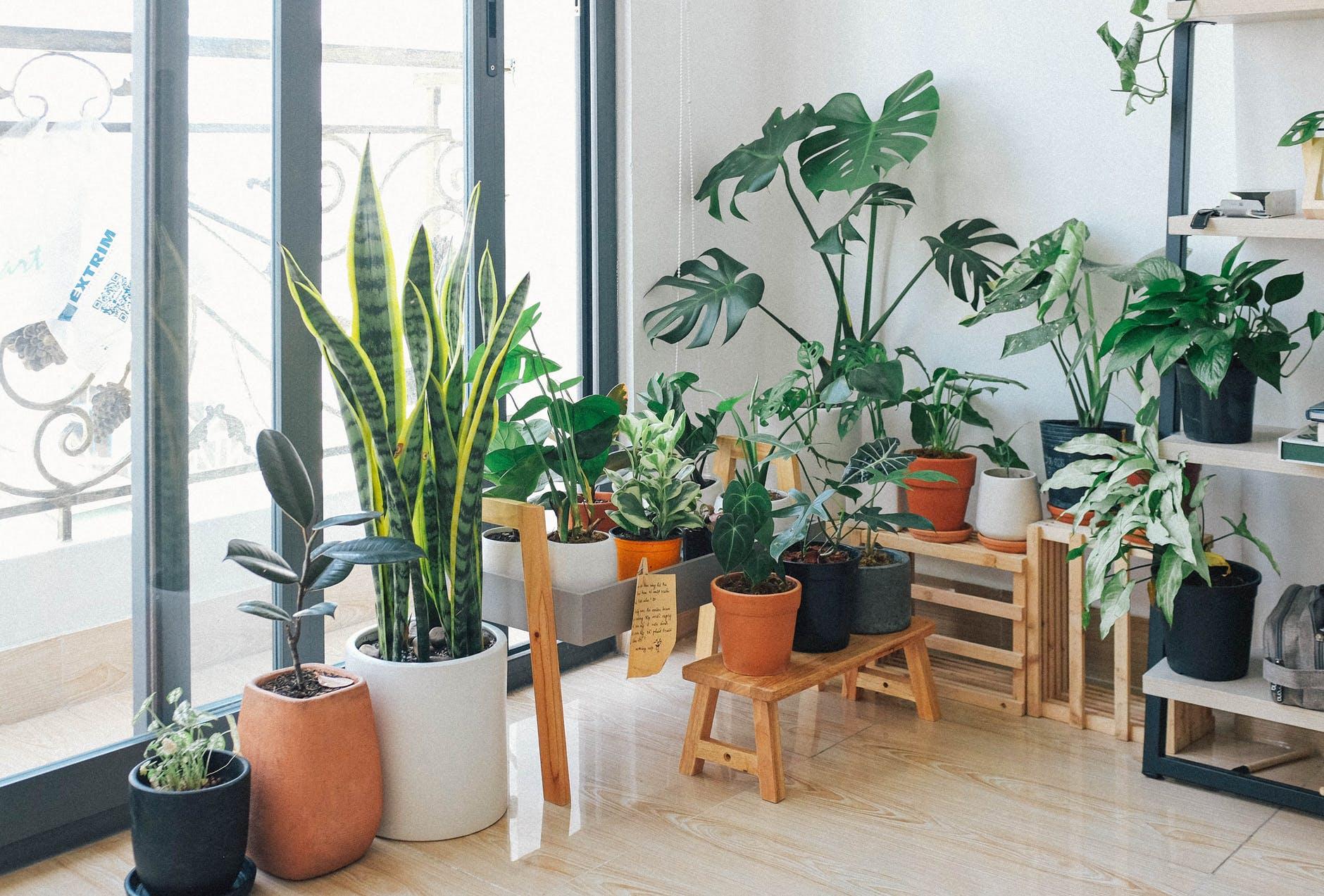 potted green indoor plants